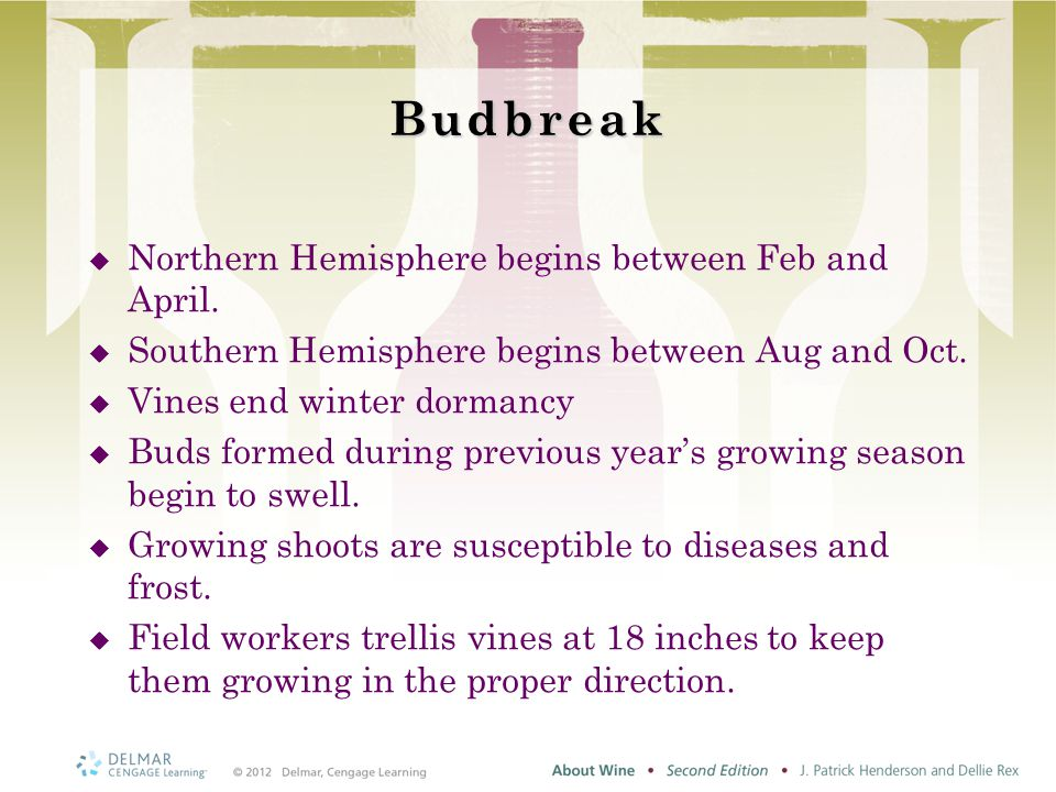 Budbreak  Northern Hemisphere begins between Feb and April.