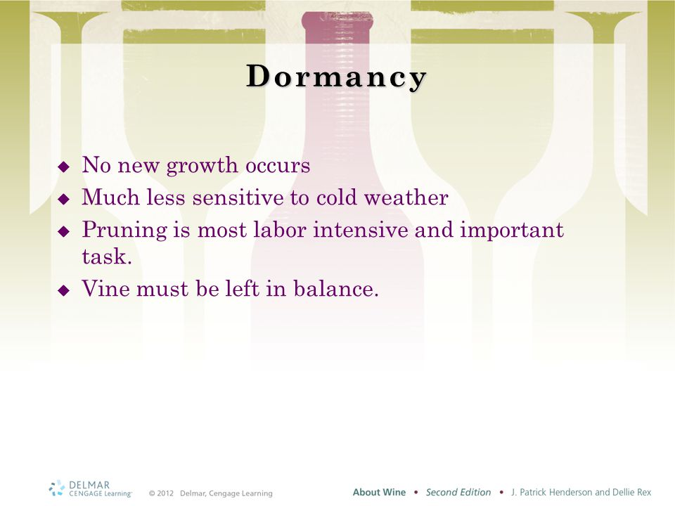 Dormancy  No new growth occurs  Much less sensitive to cold weather  Pruning is most labor intensive and important task.