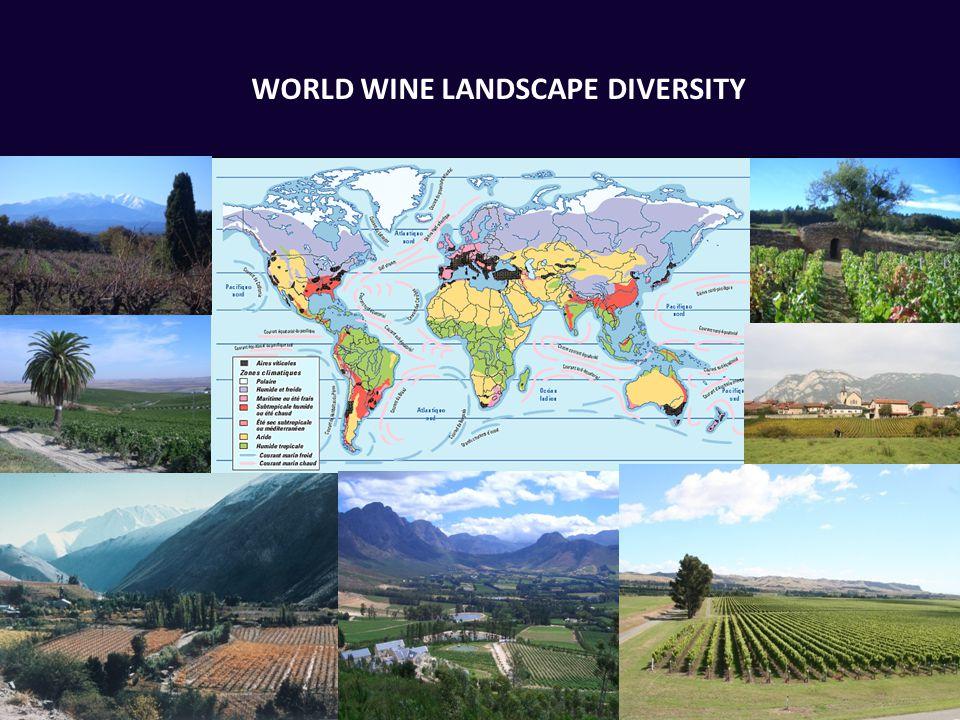 WORLD WINE LANDSCAPE DIVERSITY