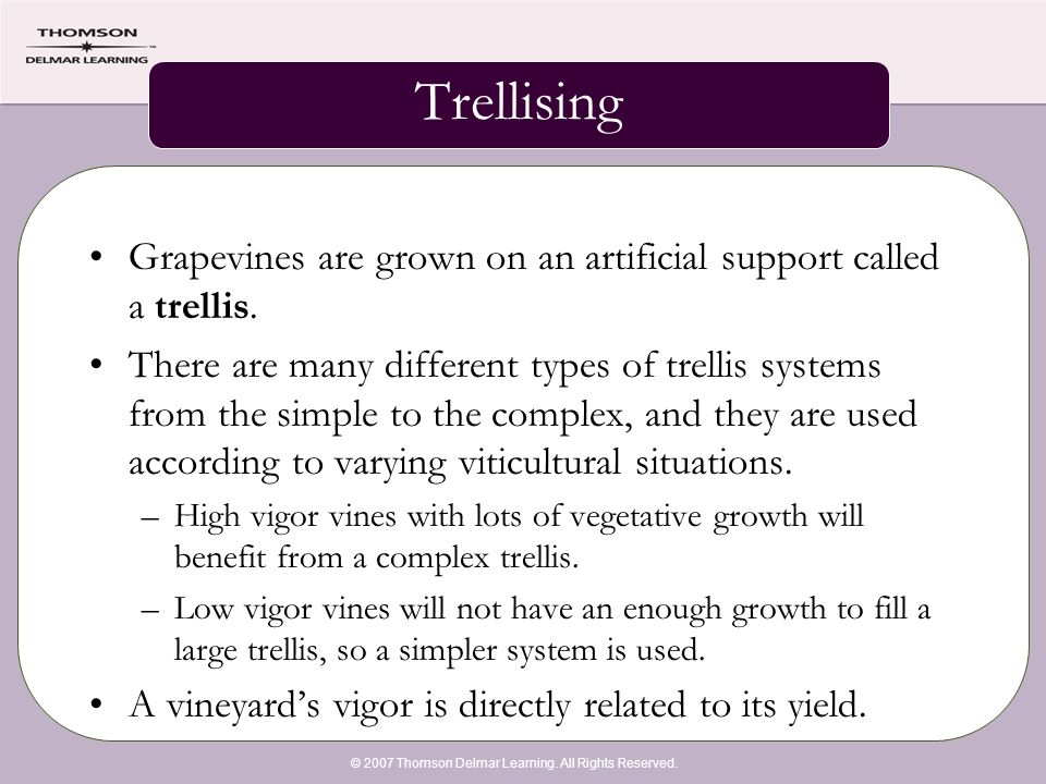 © 2007 Thomson Delmar Learning. All Rights Reserved. Trellising Grapevines are grown on an artificial support called a trellis. There are many differe