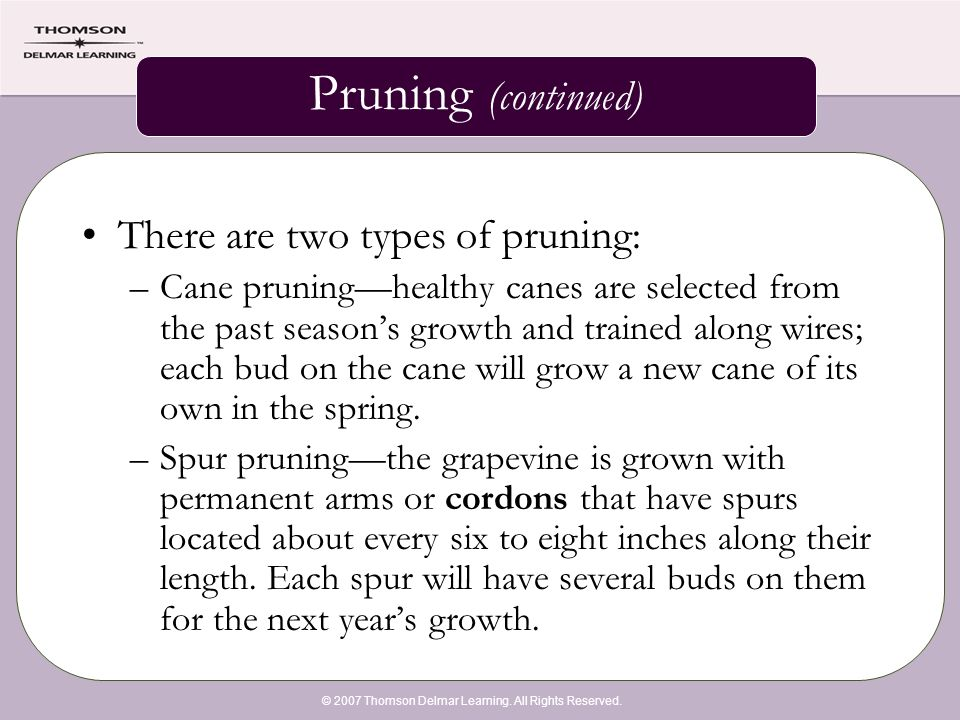 © 2007 Thomson Delmar Learning. All Rights Reserved. Pruning (continued) There are two types of pruning: –Cane pruning—healthy canes are selected from