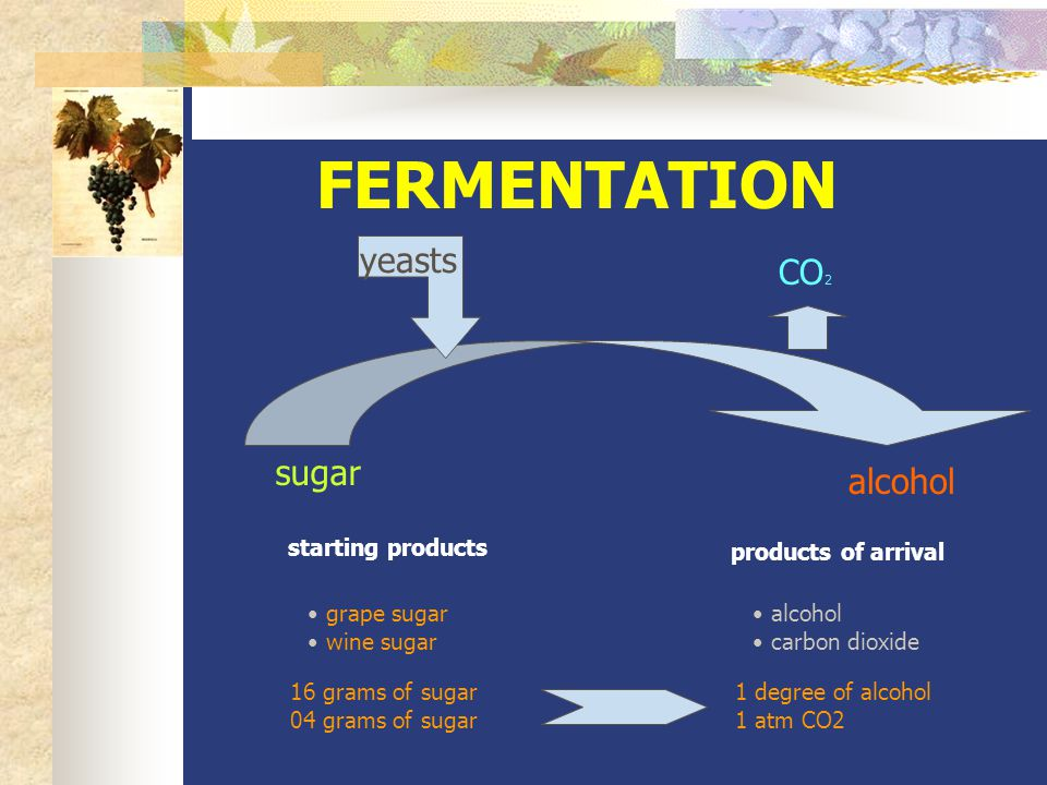 FERMENTATION sugar CO 2 alcohol yeasts starting products products of arrival grape sugar wine sugar alcohol carbon dioxide 16 grams of sugar 04 grams of sugar 1 degree of alcohol 1 atm CO2