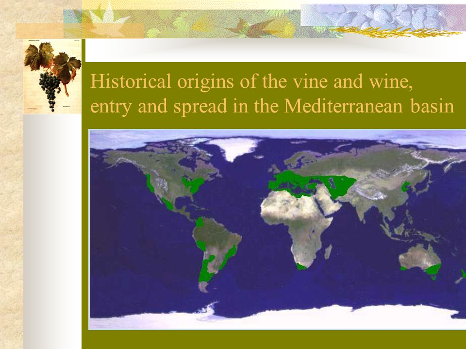 Historical origins of the vine and wine, entry and spread in the Mediterranean basin