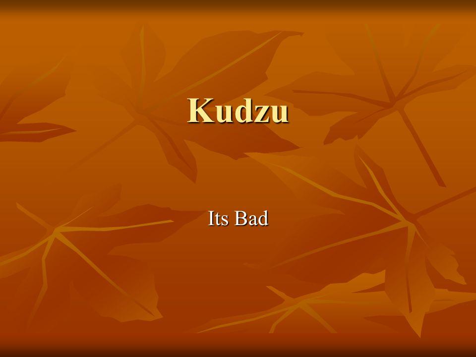 Kudzu Its Bad