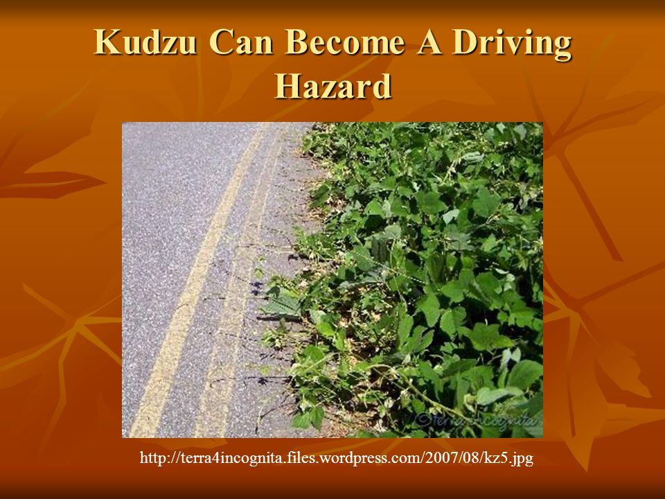 Kudzu Can Become A Driving Hazard http://terra4incognita.files.wordpress.com/2007/08/kz5.jpg
