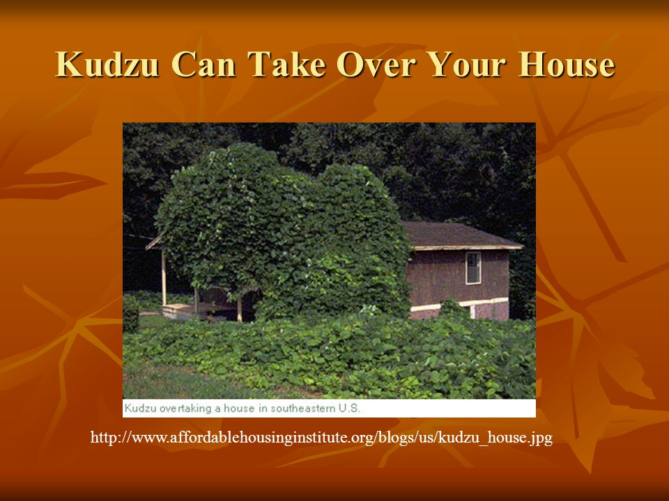Kudzu Can Take Over Your House http://www.affordablehousinginstitute.org/blogs/us/kudzu_house.jpg
