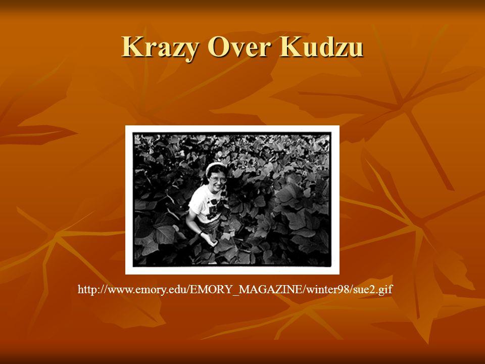 Krazy Over Kudzu http://www.emory.edu/EMORY_MAGAZINE/winter98/sue2.gif