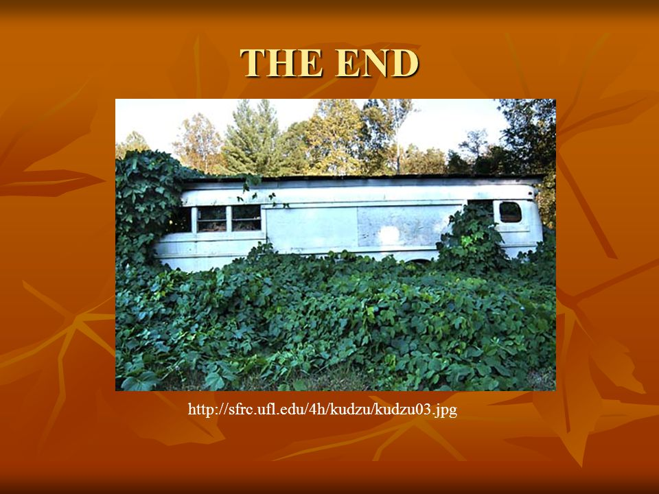 THE END http://sfrc.ufl.edu/4h/kudzu/kudzu03.jpg
