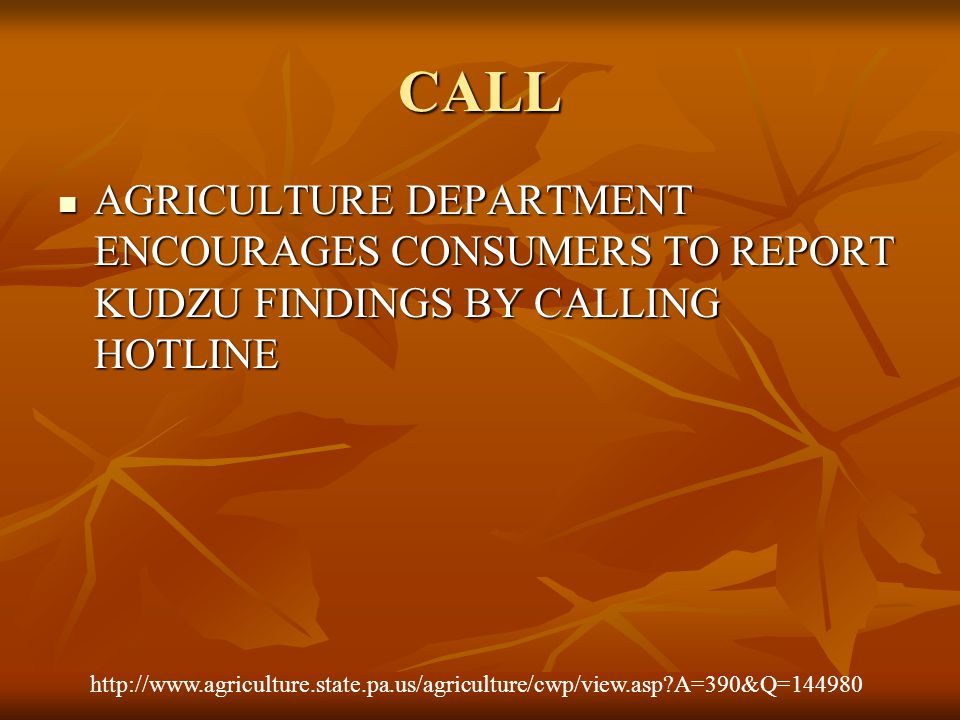 CALL AGRICULTURE DEPARTMENT ENCOURAGES CONSUMERS TO REPORT KUDZU FINDINGS BY CALLING HOTLINE AGRICULTURE DEPARTMENT ENCOURAGES CONSUMERS TO REPORT KUDZU FINDINGS BY CALLING HOTLINE http://www.agriculture.state.pa.us/agriculture/cwp/view.asp?A=390&Q=144980