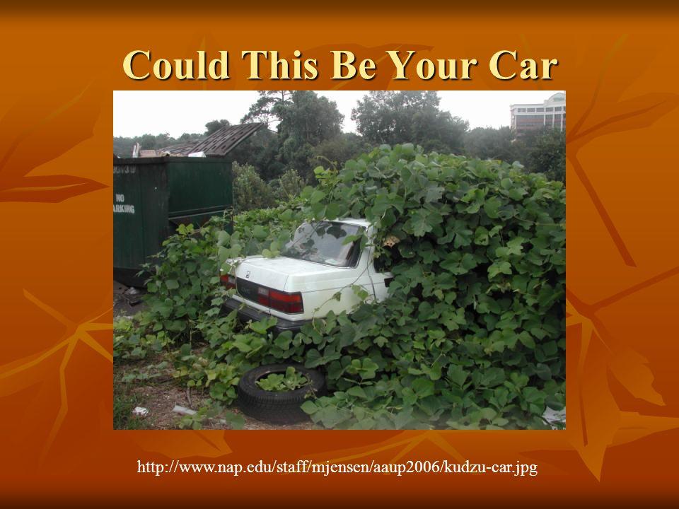 Could This Be Your Car http://www.nap.edu/staff/mjensen/aaup2006/kudzu-car.jpg