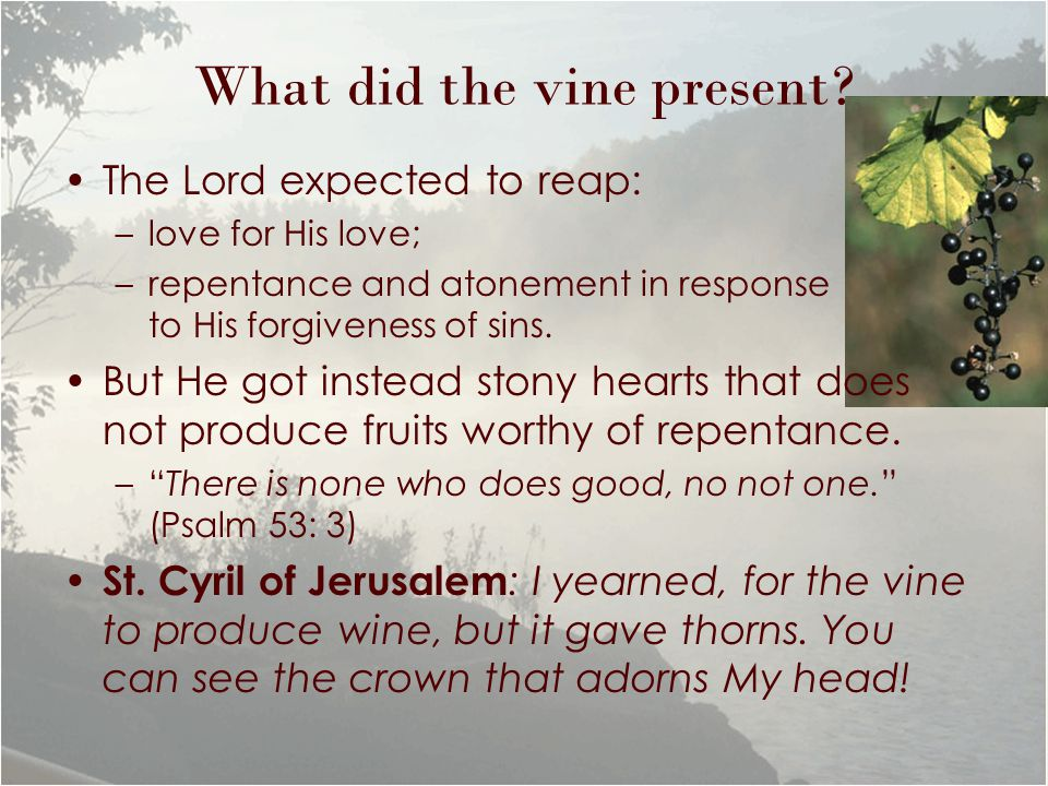 What did the vine present? The Lord expected to reap: –love for His love; –repentance and atonement in response to His forgiveness of sins. But He got