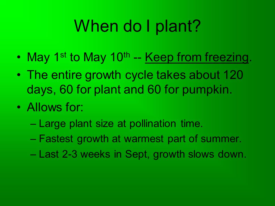 When do I plant? May 1 st to May 10 th -- Keep from freezing. The entire growth cycle takes about 120 days, 60 for plant and 60 for pumpkin. Allows fo