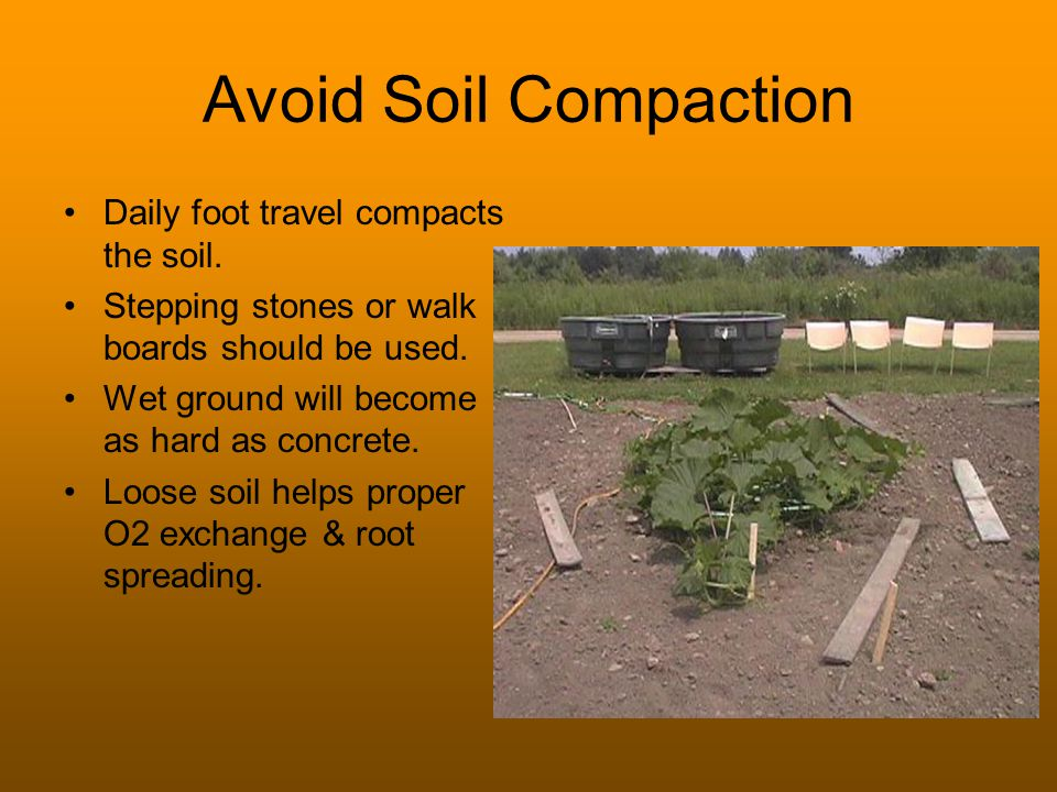 Avoid Soil Compaction Daily foot travel compacts the soil. Stepping stones or walk boards should be used. Wet ground will become as hard as concrete.