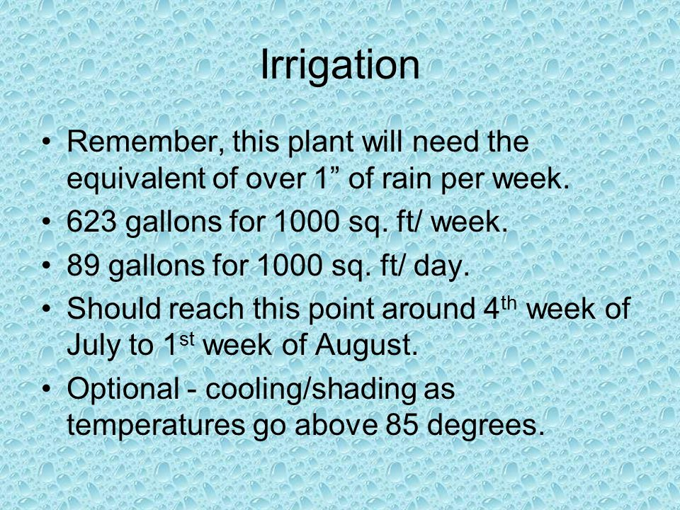 Irrigation Remember, this plant will need the equivalent of over 1 of rain per week.