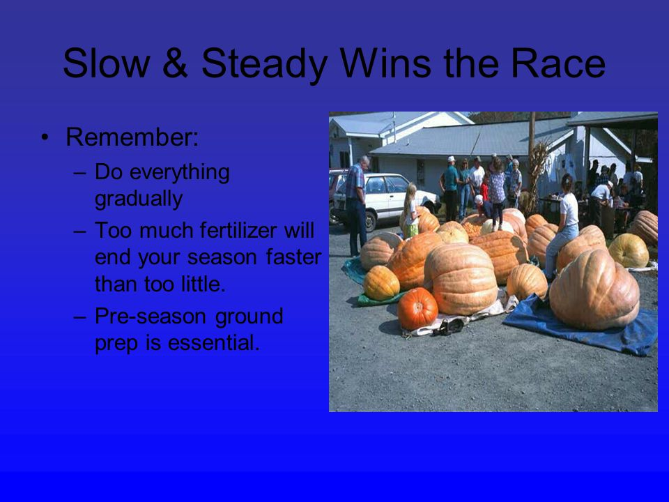 Slow & Steady Wins the Race Remember: –Do everything gradually –Too much fertilizer will end your season faster than too little.