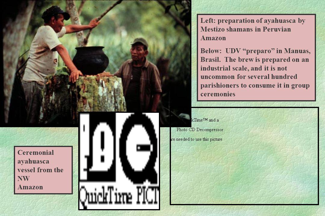 Left: preparation of ayahuasca by Mestizo shamans in Peruvian Amazon Below: UDV preparo in Manuas, Brasil.