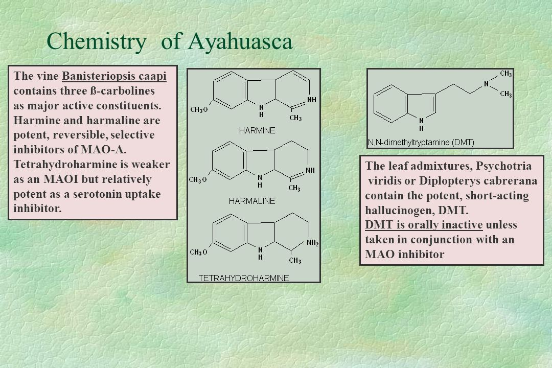 Chemistry of Ayahuasca The vine Banisteriopsis caapi contains three ß-carbolines as major active constituents.