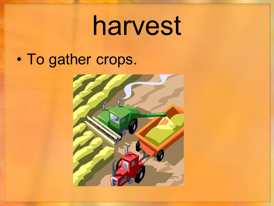 harvest To gather crops.