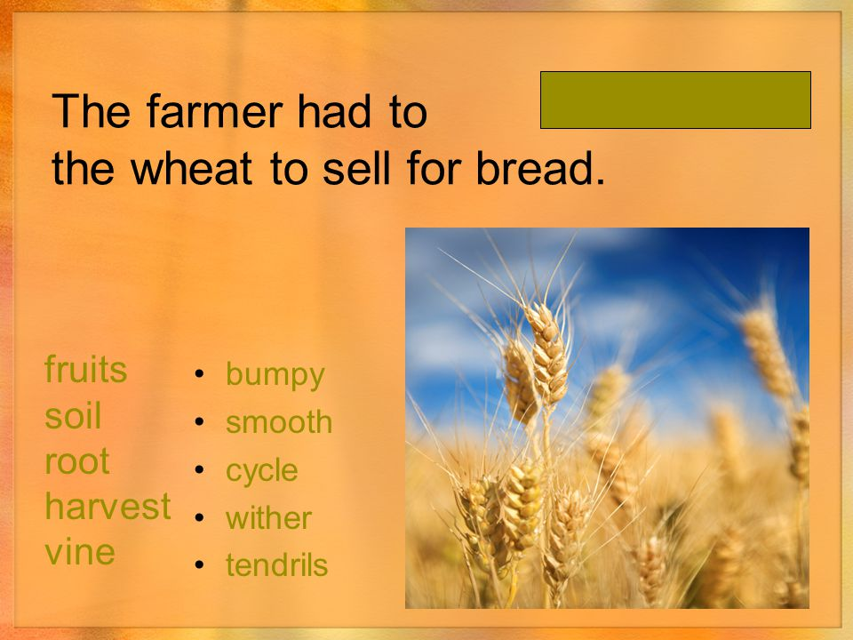 The farmer had to the wheat to sell for bread.