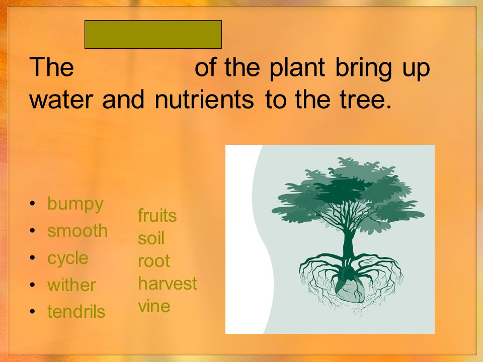 The of the plant bring up water and nutrients to the tree.