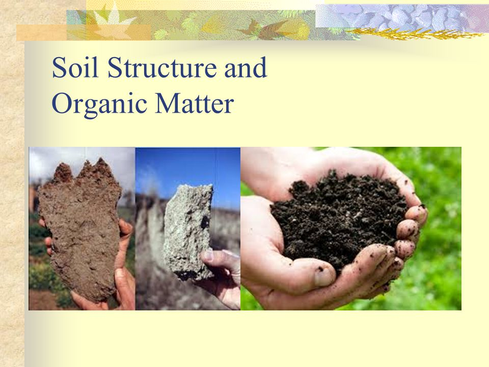 Soil Structure and Organic Matter