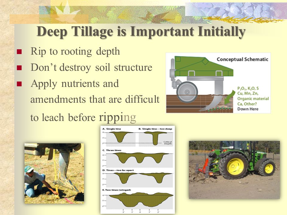 Deep Tillage is Important Initially Rip to rooting depth Don't destroy soil structure Apply nutrients and amendments that are difficult to leach before ripping