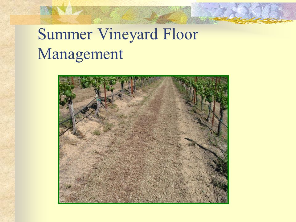 Summer Vineyard Floor Management