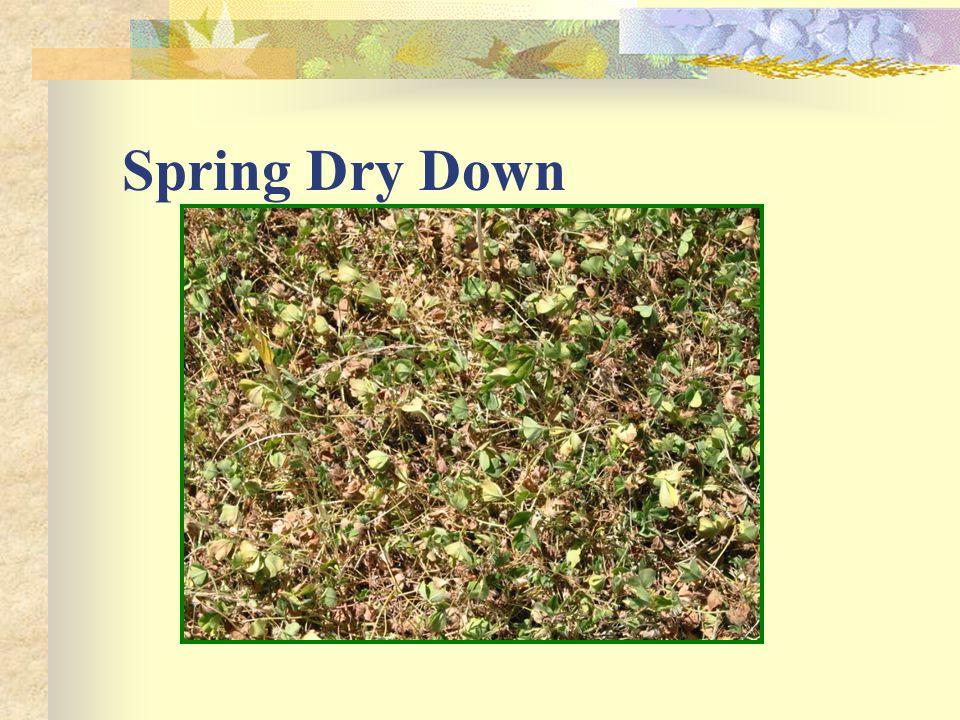 Spring Dry Down