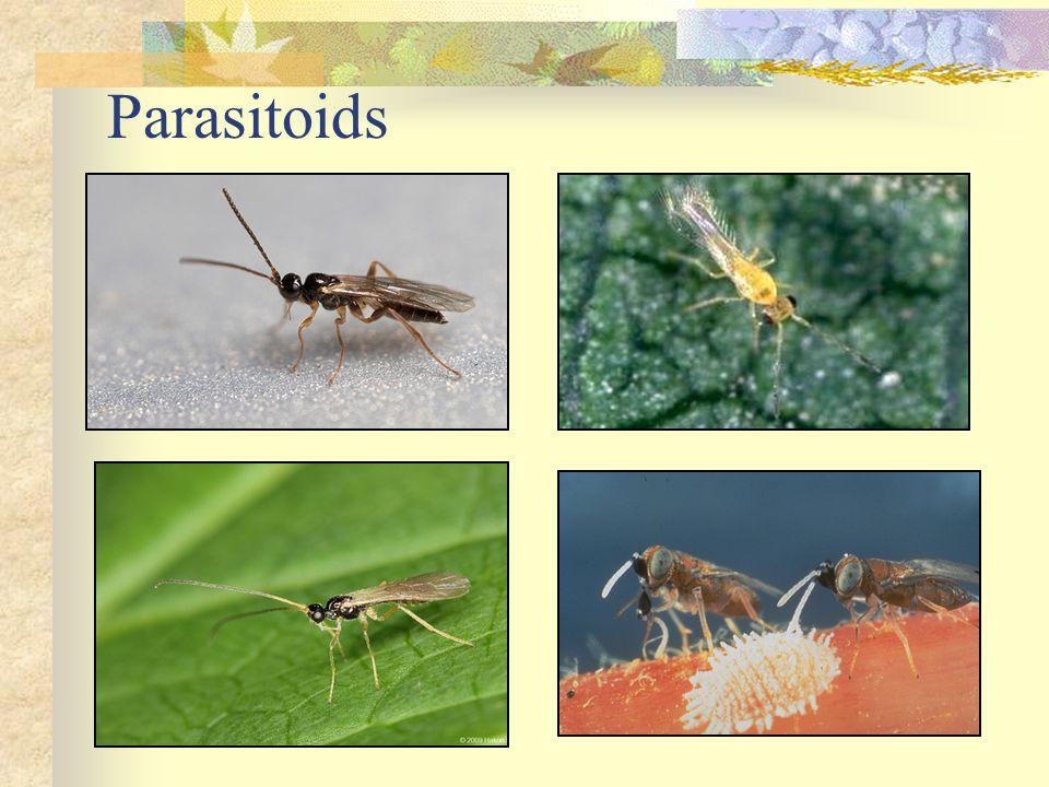 Parasitoids