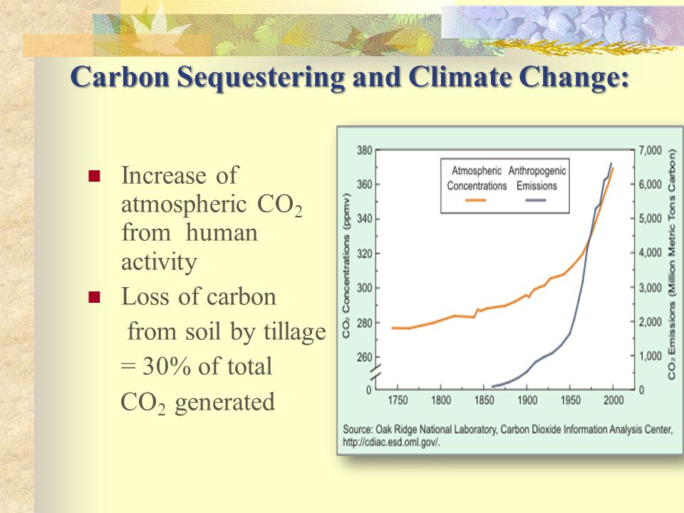 Carbon Sequestering and Climate Change: Increase of atmospheric CO 2 from human activity Loss of carbon from soil by tillage = 30% of total CO 2 generated