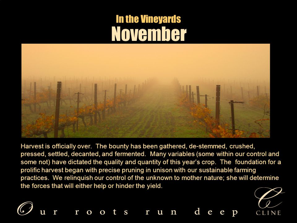 In the Vineyards Harvest is officially over.