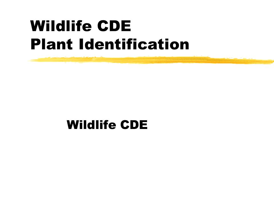 Wildlife CDE Plant Identification Wildlife CDE