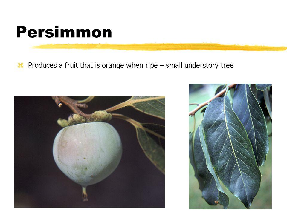 Greenbriar – vine with thorns