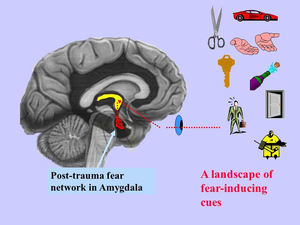 Post-trauma fear network in Amygdala A landscape of fear-inducing cues