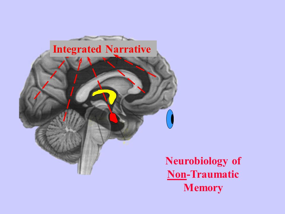Neurobiology of Non-Traumatic Memory Integrated Narrative