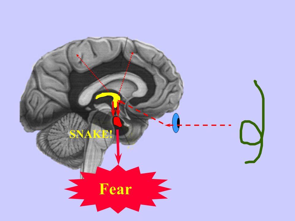 No Threat No Danger Pre-Trauma Processing of ordinary stimulus