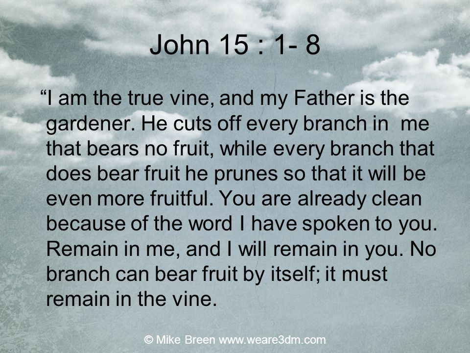 """John 15 : 1- 8 """"I am the true vine, and my Father is the gardener. He cuts off every branch in me that bears no fruit, while every branch that does be"""