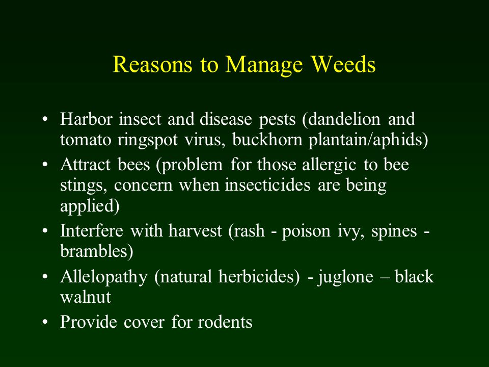 Reasons to Manage Weeds Harbor insect and disease pests (dandelion and tomato ringspot virus, buckhorn plantain/aphids) Attract bees (problem for those allergic to bee stings, concern when insecticides are being applied) Interfere with harvest (rash - poison ivy, spines - brambles) Allelopathy (natural herbicides) - juglone – black walnut Provide cover for rodents