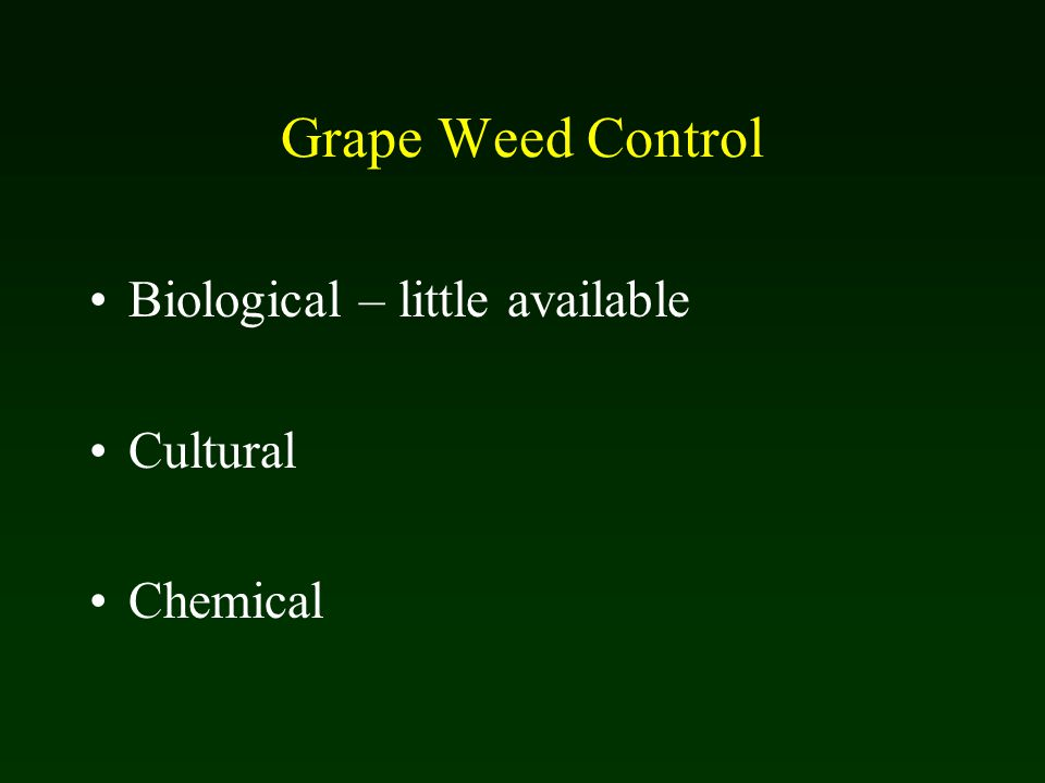 Grape Weed Control Biological – little available Cultural Chemical