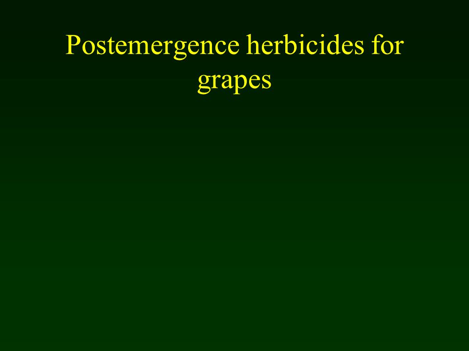 Postemergence herbicides for grapes