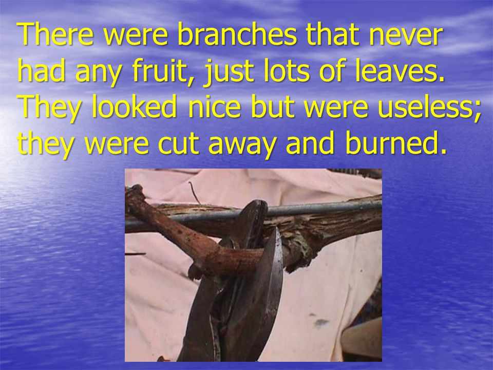 There were branches that never had any fruit, just lots of leaves.