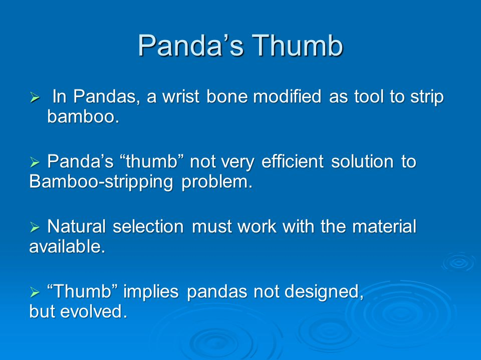 Panda's Thumb  In Pandas, a wrist bone modified as tool to strip bamboo.