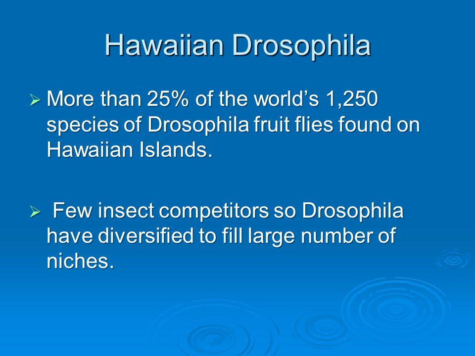 Hawaiian Drosophila  More than 25% of the world's 1,250 species of Drosophila fruit flies found on Hawaiian Islands.