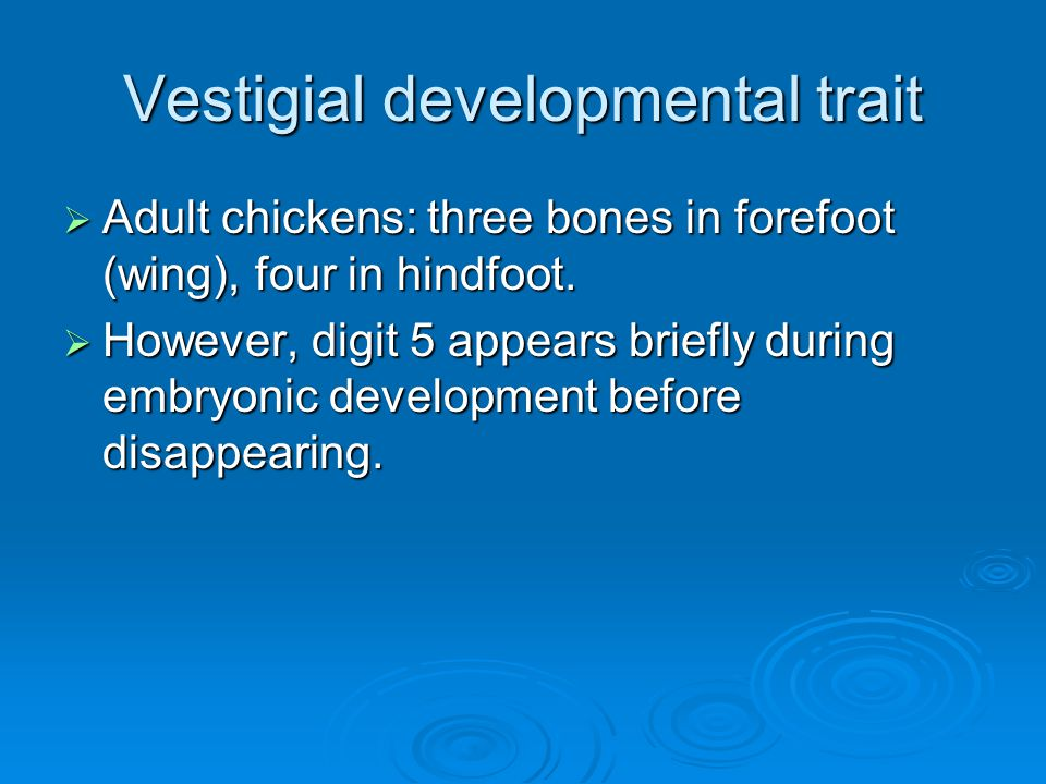 Vestigial developmental trait  Adult chickens: three bones in forefoot (wing), four in hindfoot.