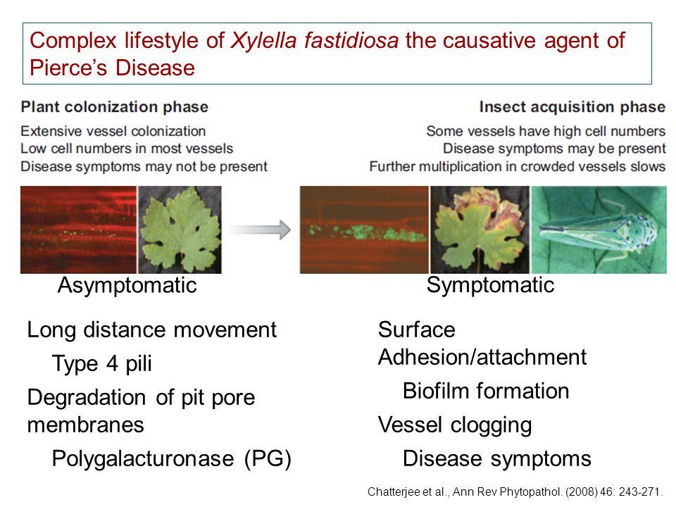 Chatterjee et al., Ann Rev Phytopathol. (2008) 46: 243-271.