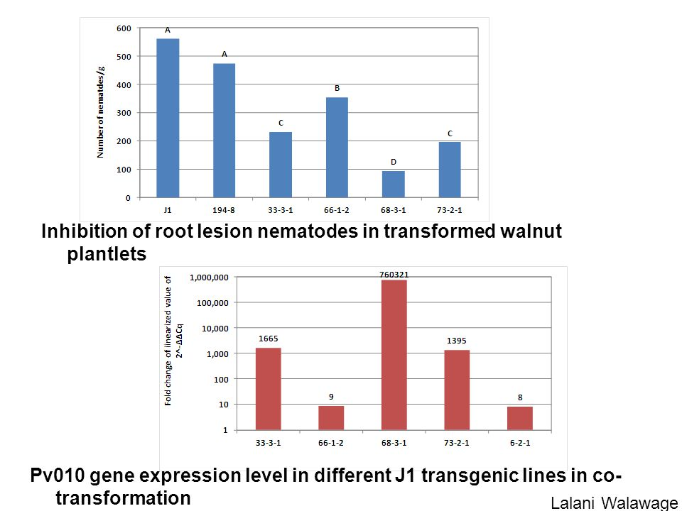 Pv010 gene expression level in different J1 transgenic lines in co- transformation Inhibition of root lesion nematodes in transformed walnut plantlets Lalani Walawage