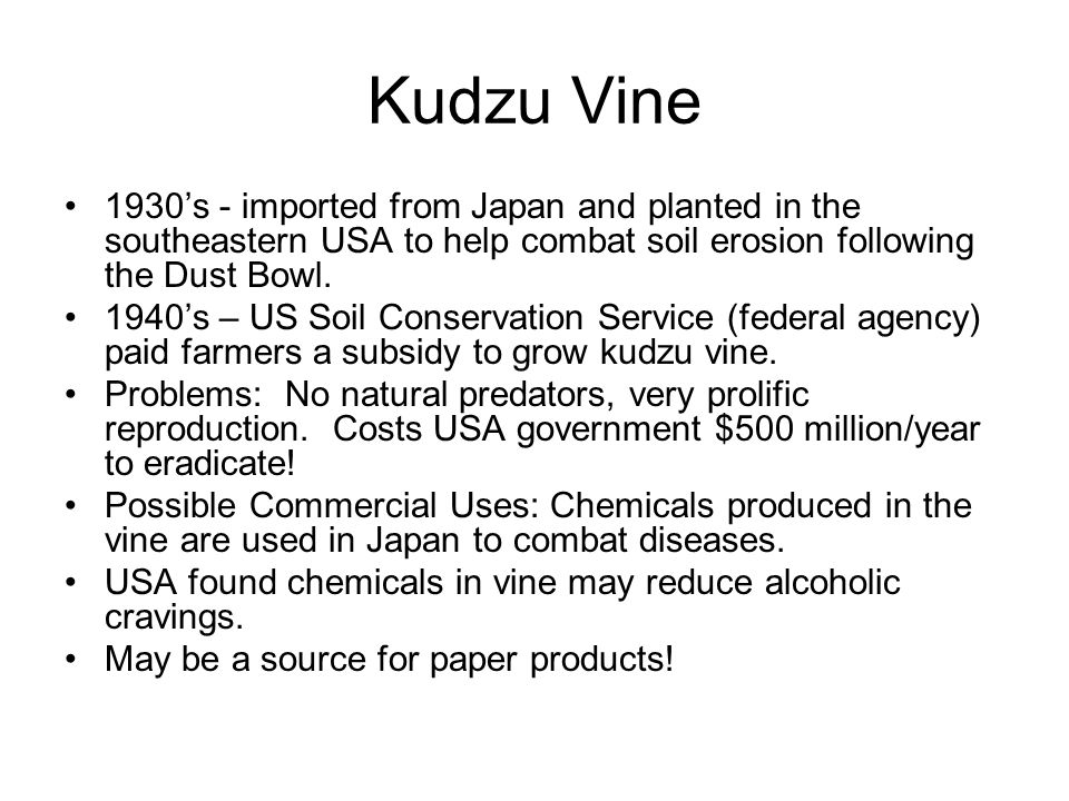 Kudzu Vine 1930's - imported from Japan and planted in the southeastern USA to help combat soil erosion following the Dust Bowl.