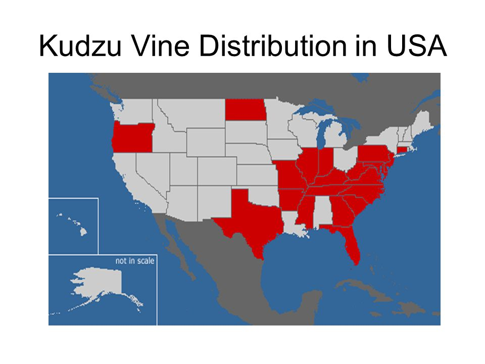 Kudzu Vine Distribution in USA