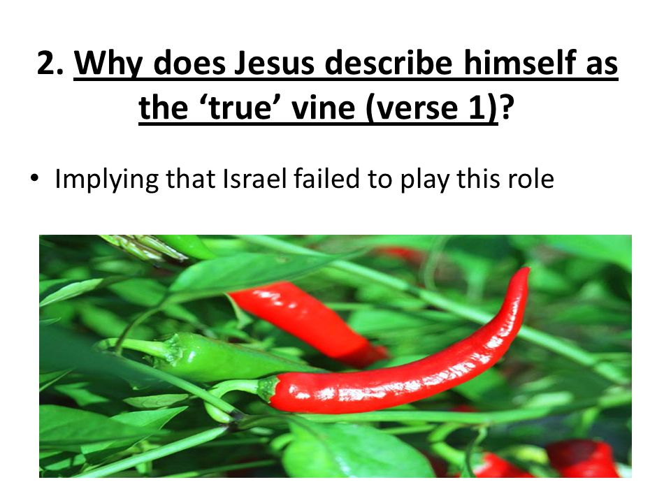 2. Why does Jesus describe himself as the 'true' vine (verse 1).