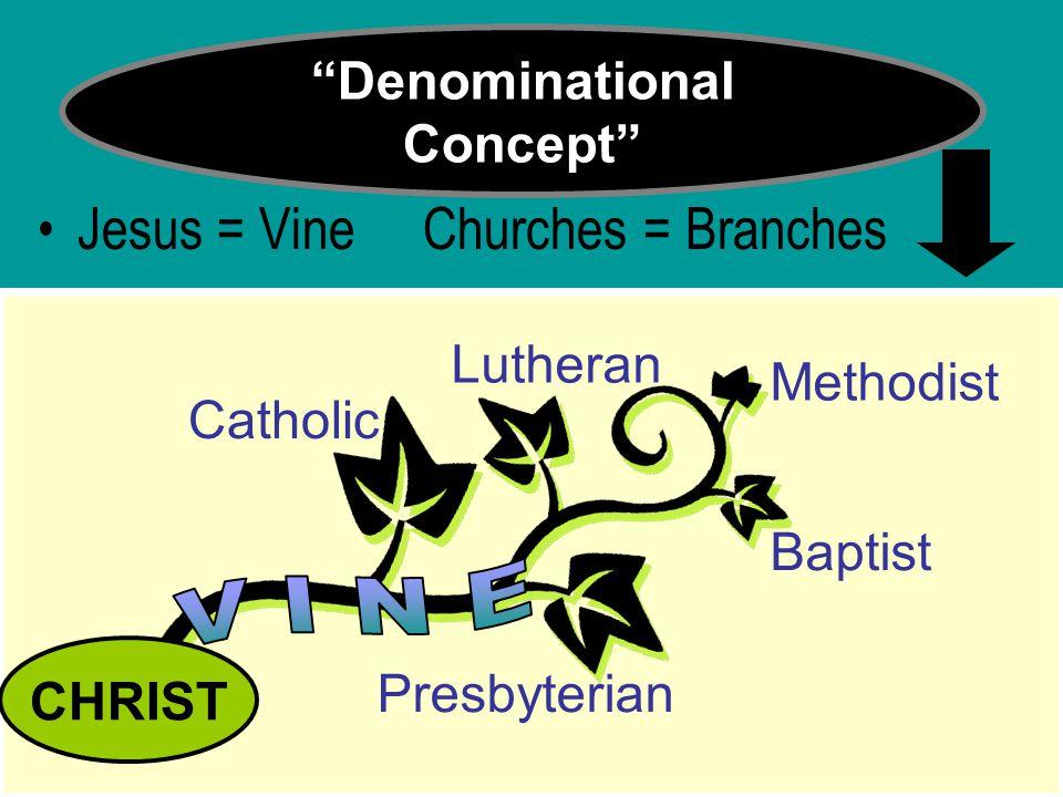 """Denominational Concept"" Jesus = Vine Churches = Branches CHRIST Catholic Presbyterian Lutheran Baptist Methodist"